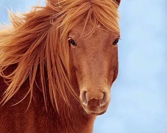 Wild Horse, 8x10 Wildlife Photography, Animal Photography, Nature Photograph, Chincoteague Pony, Assateague Island, Equine Wall Art Print