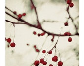 Nature Photography, Dark Berries, Bare Branches, Winter Photograph, Red Berries, Fine Art Photo