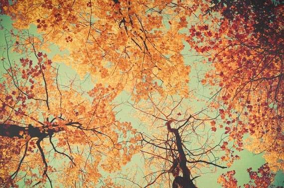 Yellow Tree Photograph October Decor Orange Brown Rustic