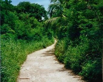 Tropical Road - 8 x 12 Fine Art Tropical Photo - Bahamas - Dirt Road - Home Decor - Office Decor