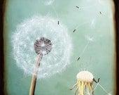 Vintage Robin Egg Blue Dandelion 12x12 print - Art Print wall decor