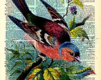 Vintage Dictionary Print - Colorful Rainbow Bird - Vintage Book Art Print - Woodland Natural History Upcycled Book Art