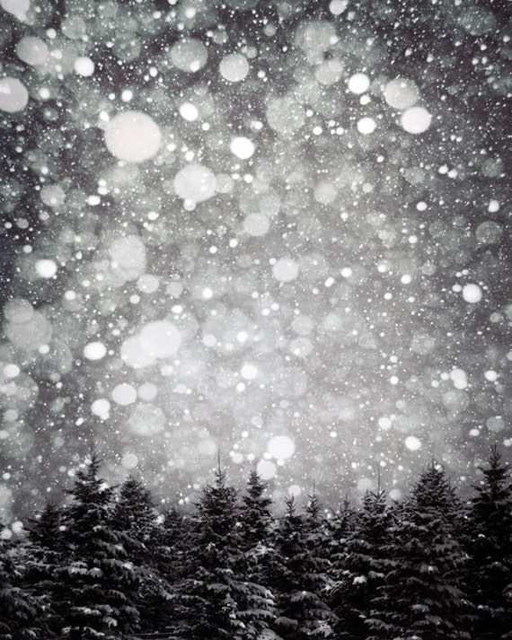 Black and White Photography Christmas Trees Rustic Wall
