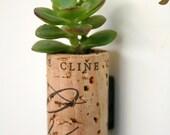 Succulent Cork Magnet, C Jade