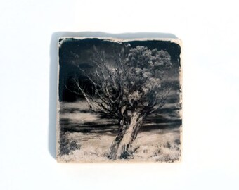 Tree Coaster (1 Stone Coaster) Black and White Fine Art, Nature Home Decor