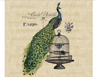 Peacock Birdcage Paris decor fleur de lis Instant graphic digital download image for Iron on fabric transfer burlap paper pillow card No 598