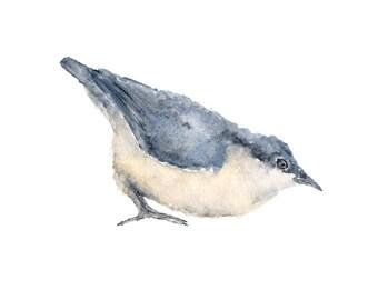 Watercolor painting, watercolor birds, bird print, bird painting, watercolor nuthatch, blue bird, watercolor animals, bird art, 10X8 print
