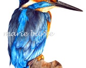 New Kingfisher - large fine art print, 11 x 16 in, kingfisher, bird painting, wildlife painting, bird watercolor, kingfisher watercolor