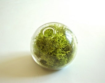 BIG SALE Little Glass Card Holder with Lime Green Preserved Moss / Photo Holder/ Business Card Display