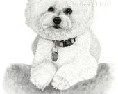 11 x 14 Bichon Frise Art Print from Original Pencil Drawing by Jennie Truitt