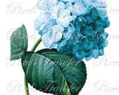 HYDRANGEA Digital Download Instant Download Large Digital Images flowers Redoute 097