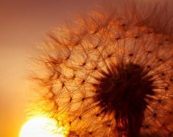 Dandelion photo Digital Download Fine Art Photography dandelion seeds Make a wish dandelion against sunset sky