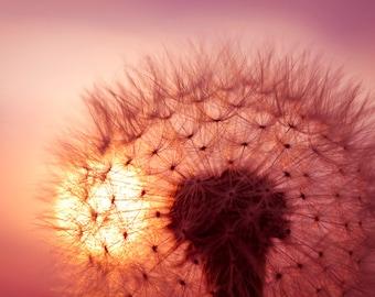 Dandelion photo Digital Download Photography dandelion seeds dandelion against sunset sky