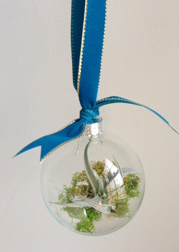 Glass terrarium ornament with air plant
