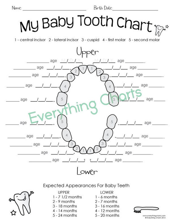 Baby Tooth Chart PdfPrintable