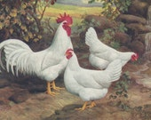 LAMONAS Hens, Rooster, Chickens - A. O. Schilling Original Color Plate from 1940s Periodical on Poultry
