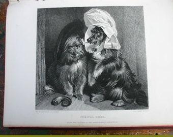 Comical Dogs by Edwin Landseer Vintage  Engraving