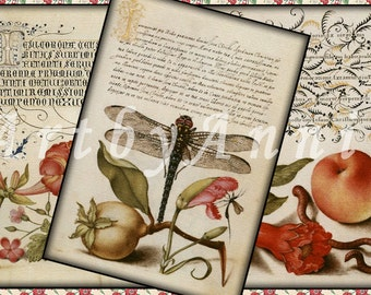 Nature Illuminated N1- 2,5x3,5 inch ATC, ACEO cards, Digital Collage Sheet for Scrapbooking