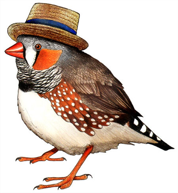 Zebra Finch in a Boater Hat  - A4 Print