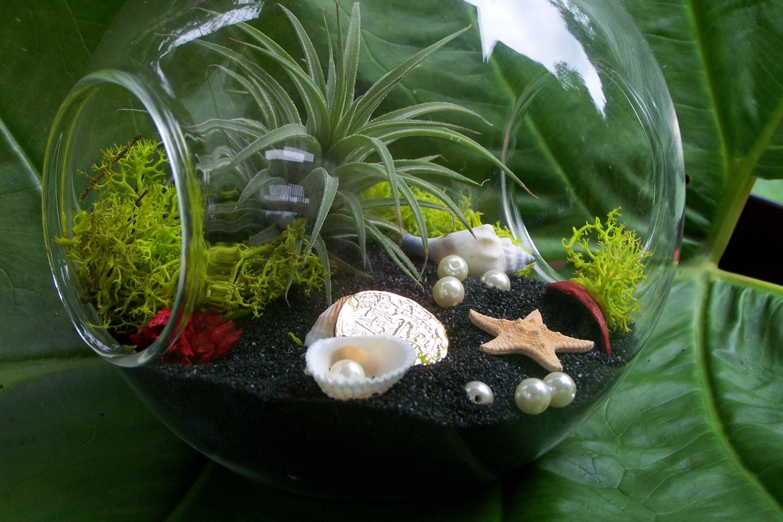 Air plant terrarium on black beach sea shells pearls gold - Miniature terrarium decorations ...