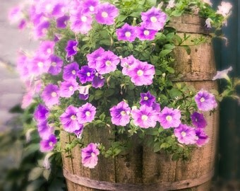 Barrel of Flowers, Foral Arrangement, Dreamy, Beautiful, Lavendar, Pink Petunias, Soothing Color Photography Print, signed.