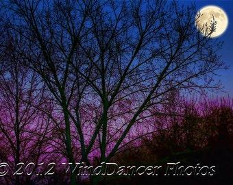 March Moon - 9 x 12 Fine Art Photograph - Supermoon - Moon - Trees -  Night Sky - Home Decor