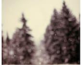 Snow Day - Winter Photograph - Snow Photography - Wonderland - Pine Tree - Snow - Winter - Michigan - Original Fine Art Photograph - Alicia
