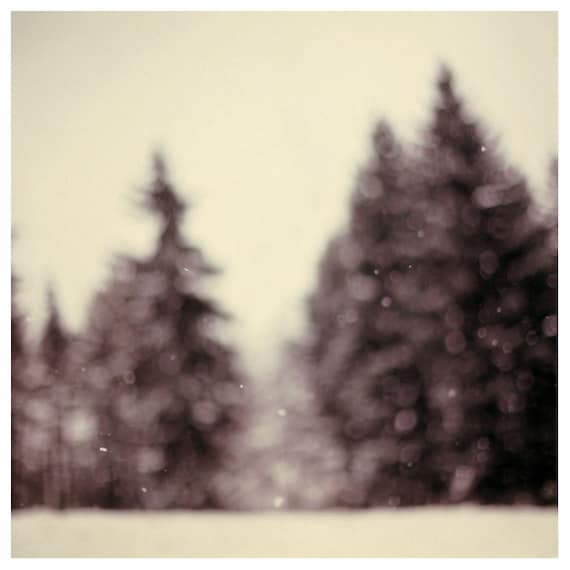 Snow Day - Winter Photograph - Snow Photography - Wonderland - Pine Tree - Snow - Winter - Michigan - Original Fine Art Photograph - Alicia