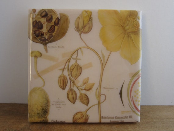 Floral Anatomy Tile Coaster