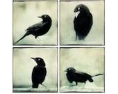 Raven Photo Set, Halloween Decor, Crow Photos, Raven Art, Crow Prints, Wall Art, Spooky, Photography Print Set, Gothic Art, Set of 4 Prints