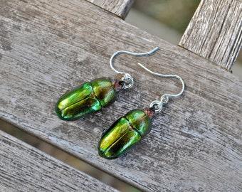 Floating Real Stag Beetle Earrings Green & Rust Moonrise Kingdom Movie