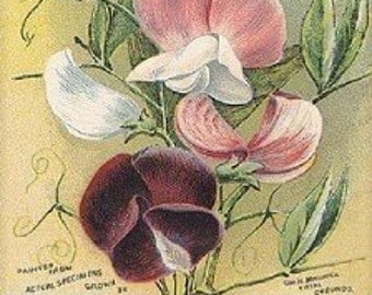 Art Print on Silk from a VINTAGE seed packet Sweet PEAS - Fiber arts Crazy Quilting collage Embellishing  and so much more