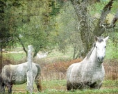 White Horse photos, Nursery childrens wall art, White Green Decor Dreamy nature print equestrian art, horse lover gift, 8x10, 11x14, Matted