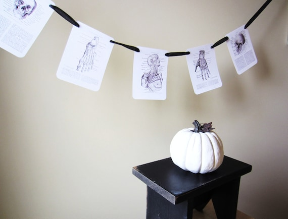 Vintage Anatomy Party or Halloween Garland or Banner