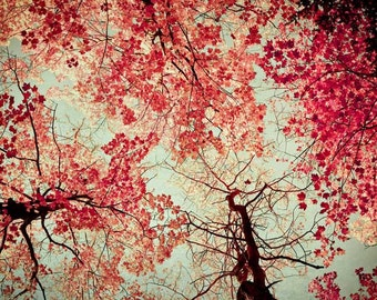 Red tree photograph / colorful nature photography / woodland art / nursery art / farmhouse decor / surreal  / Autumn Abstract / fine art