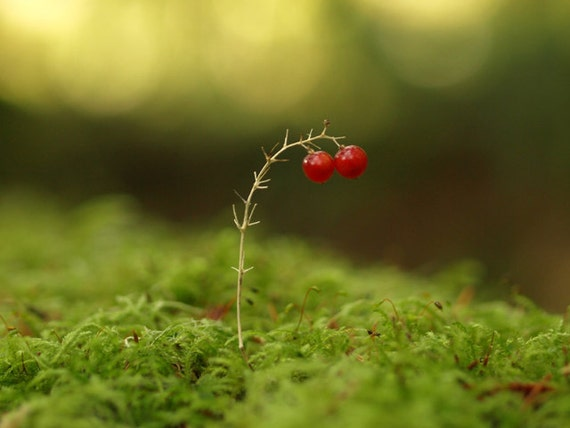 Red Berries in the Forest 8X10 Print Berry Moss Woodland Forest Print Green Moss Nature Photography