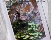 Photo Card Bullfrog in the Lake