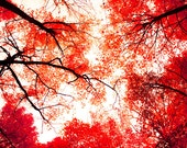 Red leaves fall colors red foliage autumn maples fire red solitude fresh air fall hiking vermilion enchanted forest - Canopy 8x12