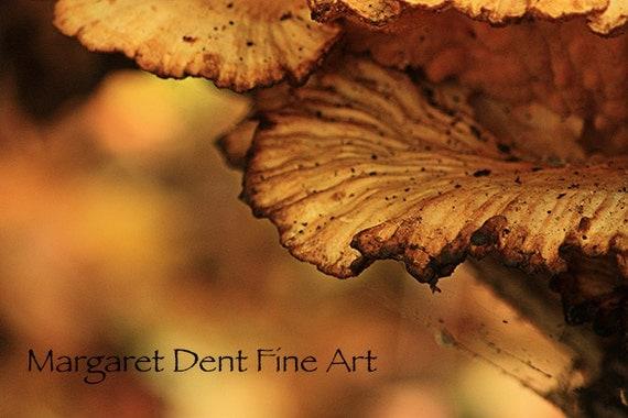 Mushroom Photo Fall Nature Photography 8 x 12 Print.