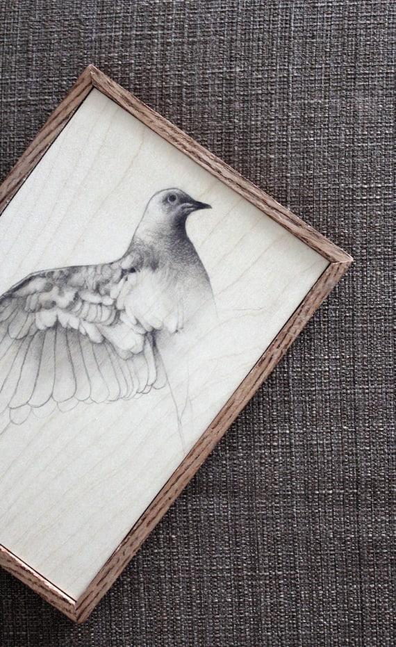 Original Pencil Drawing Bird Dove Sketch