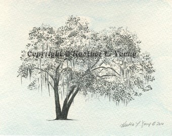 Live Oak Tree Watercolor Painting Print in Icy Blue - Pen and Ink Drawing  - Coffee Bluff Savannah