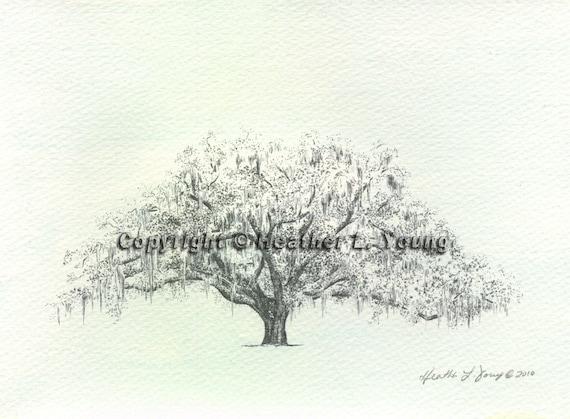 Candler Live Oak Tree Savannah Drawing Print  Blue Watercolor Wash
