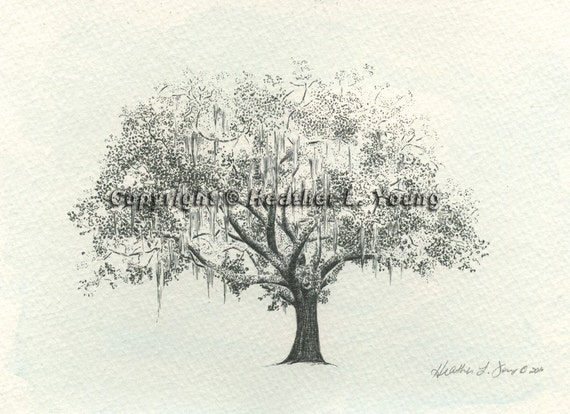 Gordonston Savannah Live Oak Tree Watercolor Pen and Ink