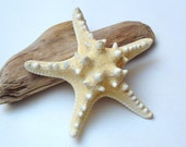 5 1/2 - 6 inches light olive STARFISH for your collection,  home decor or beach wedding decoration