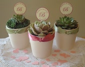 12 Succulent Plant Rosette Favors in White Ceramic Pots for Wedding, Baby, Shower, Favor Box/Tag Options Available