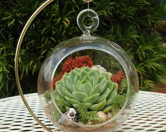 SALE Budget-Priced Colorful Succulent Terrarium Garden Hanging DIY Kit with Gift Box Option and FREE Stand