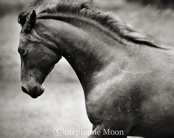Square fine art black and white horse photograph