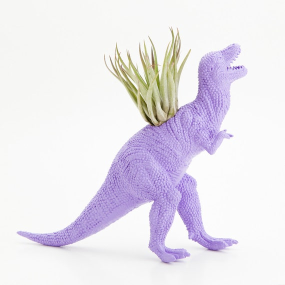 Dinosaur Planter with Air plant- Dorm Room Geekery Decoration, T Rex Dino, Lilac, College