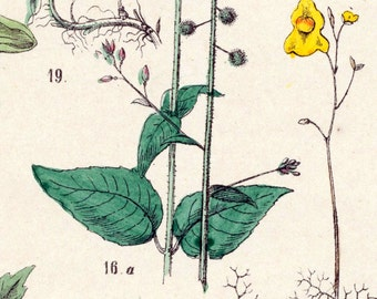 1881 Antique Hand-coloured Botanical Plate of Plants (4)