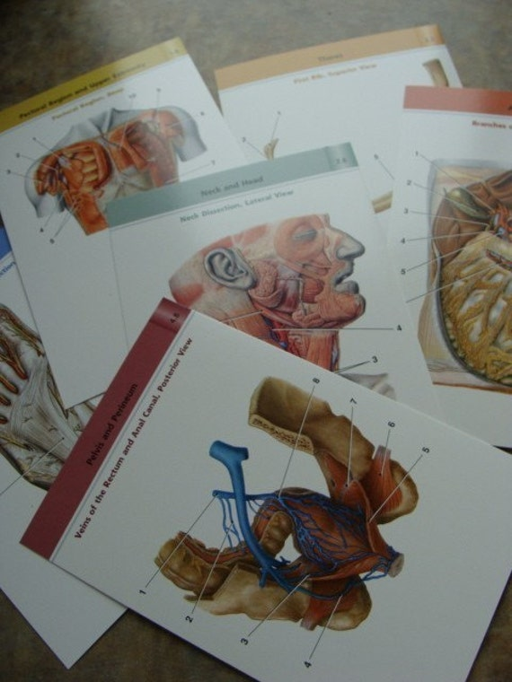 One Dozen Awesome Anatomical Medical Study Anatomy Flash Cards